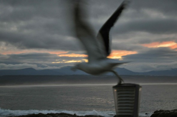 A seagull takes off from Beacon Island