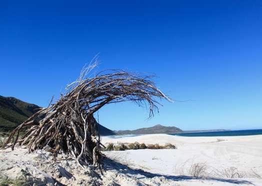 Janet Ranson, May 2014. A temporary sculpture created from found driftwood, inspired by Hokusai's Wave. Witsands Beach, close to Scarborough, South Peninsula, Cape Town, South Africa. Photo: Janet Botes.